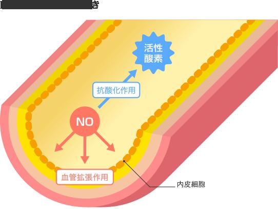 NO(一酸化窒素)の働き
